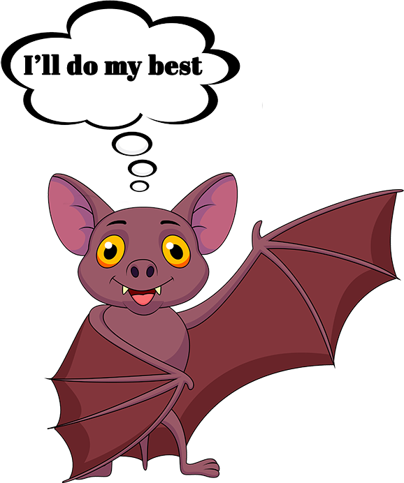 bat facts - answering maine bat questions