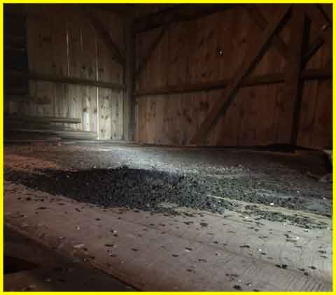 maine bat facts at Midcoast Wildlife Specialists - guano in attic