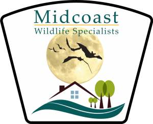 main midcoast wildlife specialists logo - the Maine bat control specialists